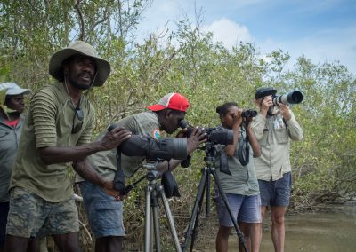Rangers surveying shore birds in the mangroves